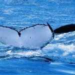 Stay at Edge Of The Forest Margaret River Accommodation then go on a whale watching tour