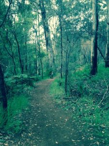 Forest Walk and Cycle Trails border Edge Of The Forest Motel Margaret River Accommodation