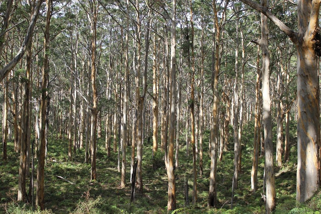 Boranup Forest is just 25 minutes drive from Margaret River Accommodation Edge Of The Forest Motel