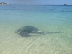 Stingrays at Hamelin Bay 25 minutes drive from this Accommodation Margaret River