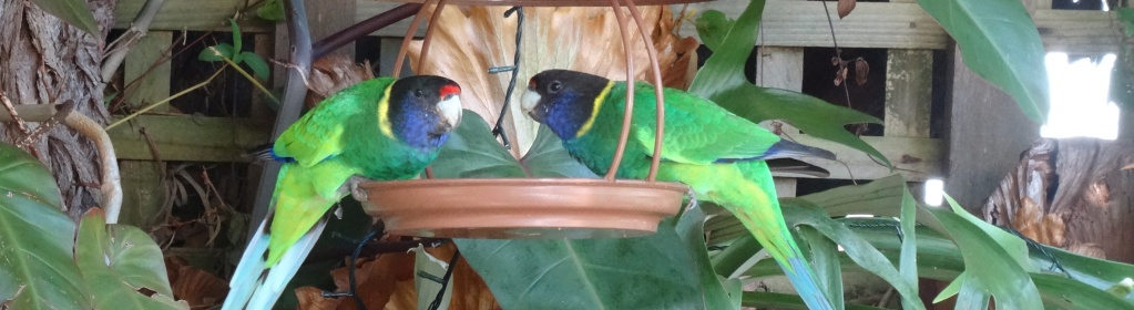 Native birds love the gardens at this Margaret River Accommodation
