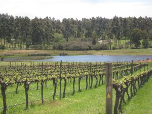 Vines and views from many winery restaurants