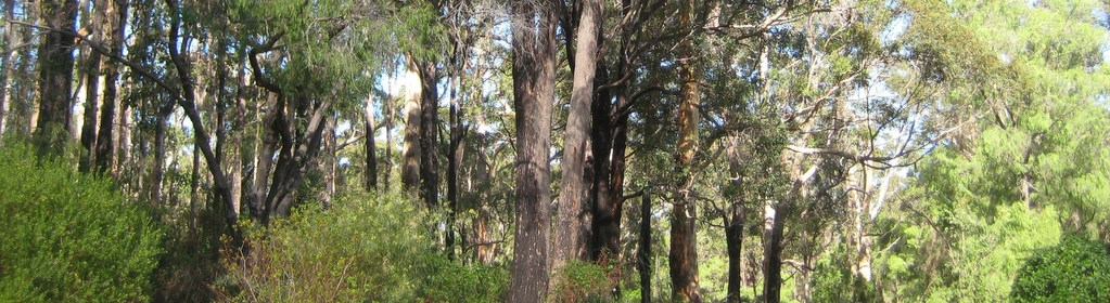 Forest walk trails lead to the Margaret River and town from this Margaret River Accommodation