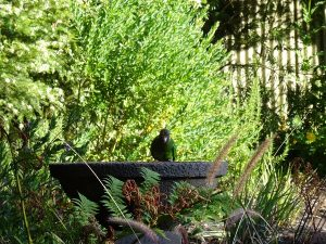 Parrots enjoy the birdbath and gardens