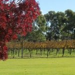 Wineries are a short drive from this Accommodation in Margaret River