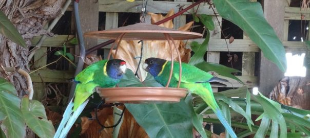 Nataive Birds love the gardens